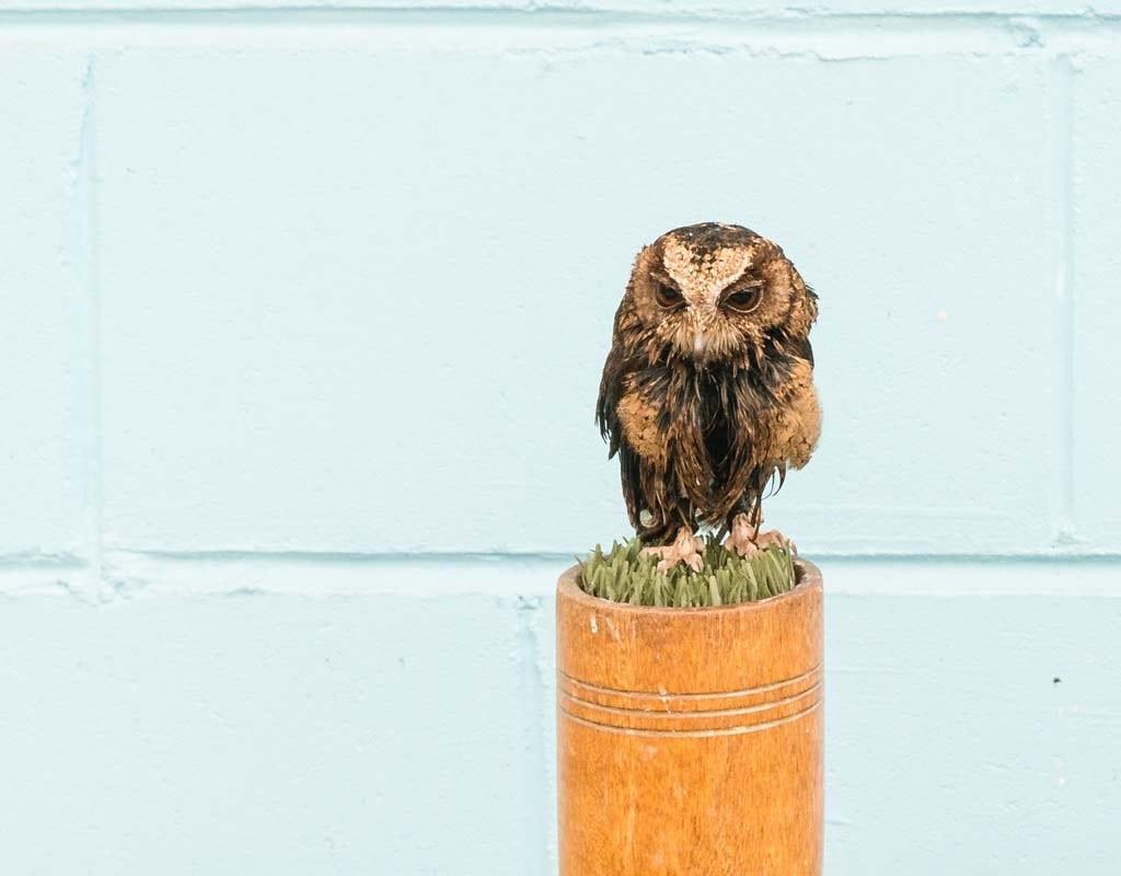 Hall Place - Jambs Owls