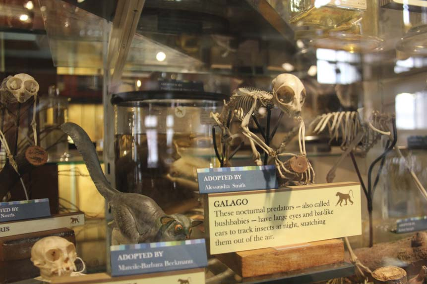Halloween Things to do in London - Grant Museum of Zoology